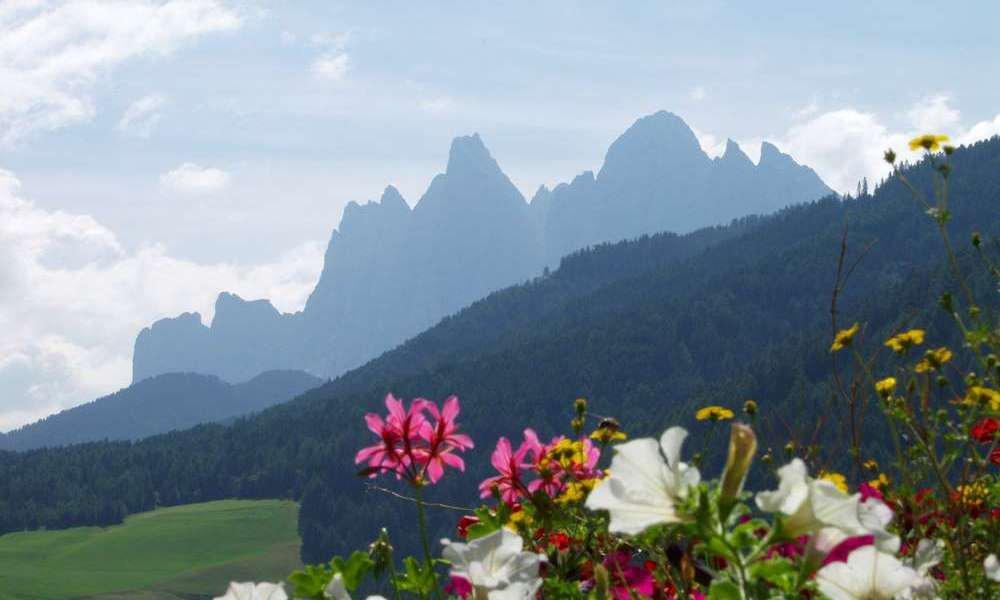 Primavera alpina a Funes